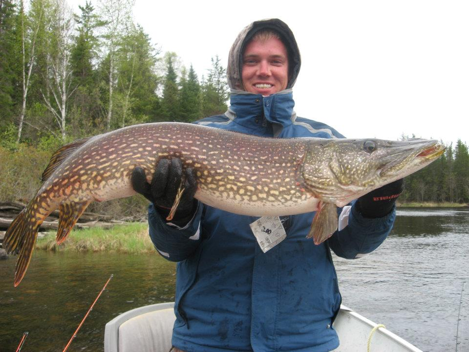 Walleye fishing red pine lodge for Point lookout fishing report
